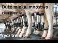 Mleko Historia obłędu....