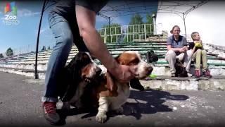ГоПро и Аджилити - Соревнования собак по Аджилити   GoPro and Agility - Go pro dog
