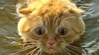 Плавающие кошки показ слайдов 2015!