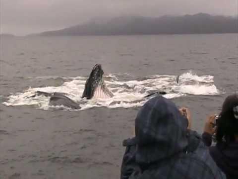 Port Simpson elders whale watching