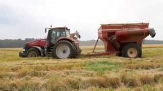 Arkansas Rice Harvest