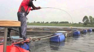 Repeat youtube video ชะโดยักษ์ ข้างกระชังปลา