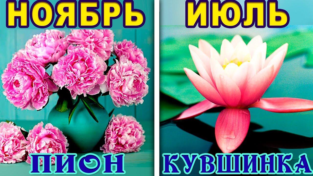 Смотреть Цветок по дате рождения и знаку зодиака видео