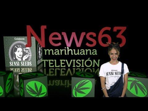 Marihuana Legal Uruguay Vs Bancos, Rototom, Tinturas de Cannabis, trucos FLORACIÓN exterior. News 63