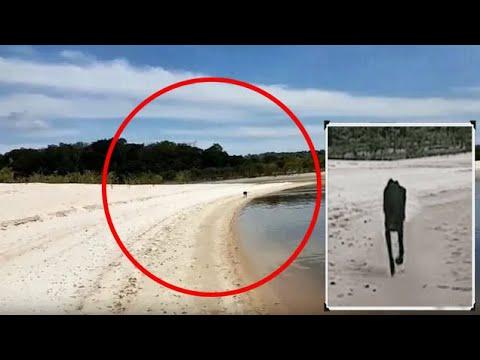 Турист проплывает мимо необитаемого ОСТРОВА, как вдруг к нему приближается странное СУЩЕСТВО!