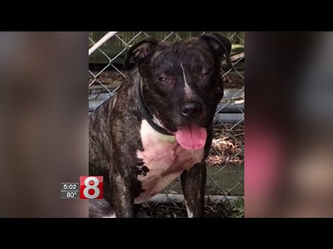 Elderly woman healing after pit bull attack