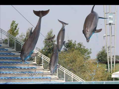 Delfini @ ZooMarine Rome