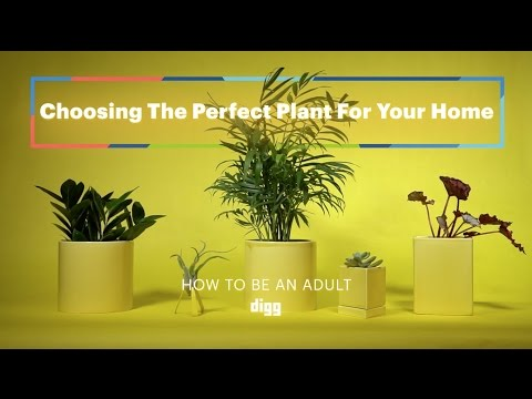 "Find the Best Spots for Houseplants In Your Home With the ""Shadow Trick"""