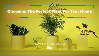 How To Be An Adult: Choosing The Perfect Plant For Your Home