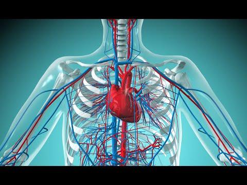 Видео уроки по окружающему миру 4 класс кровеносная система