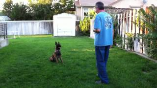 Puppy Training - Diary Episode #20 - Have Fun Teaching Sits & Downs At A Distance With Your Dog