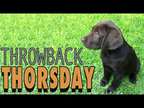 Thorsday: Throwback Thorsday