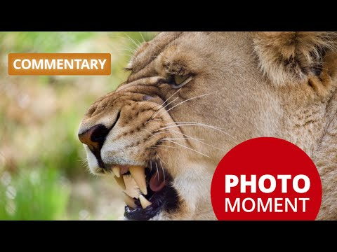 Commentary: GH5 Training Update, Lexar Memory Cards, and More! —PhotoJosephs Photo Moment 2017-06-27