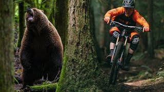 Grizzly Bear Chases a Mountain Biker