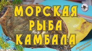 Морская рыба. Рыба камбала видео от Petr de Cril'on