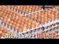 친환경 달걀에서 맹독성 물질 DDT 검출, 연속되는 살충제 달걀 논란