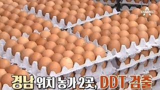 친환경 달걀에서 맹독성 물질 DDT 검출, 연속되는 살충제 달걀 논란 thumbnail