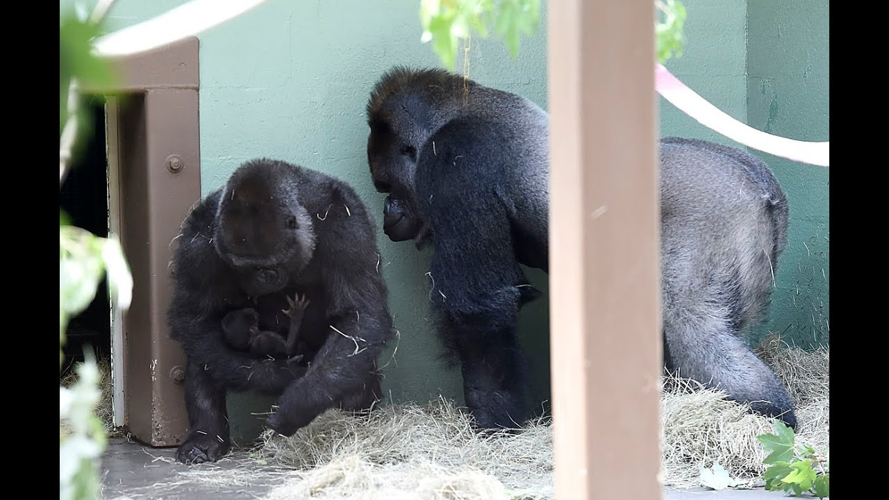 knoxville zoo welcomes second