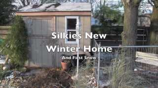 Silkies new winter home