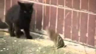Miu më i fortë në botë ! (VIDEO)