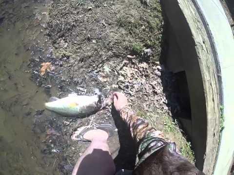 Squirrel lake park nc bass fishing