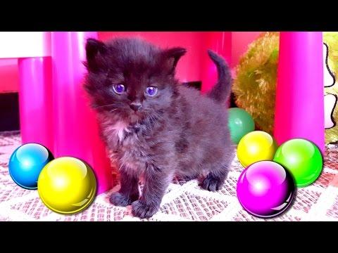 Ragdoll kittens - Котята рэгдолл играют перед сном - YouTube