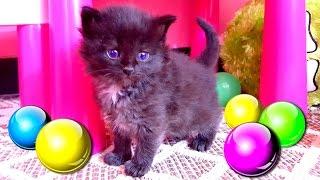 Котята играют с шариками в тоннеле❤ Маленькие котята впервые вылезают из корзинки! Наши кошки и коты