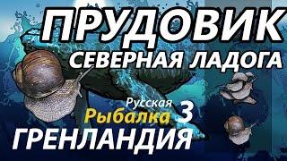 Прудовік Північна Ладога / РР3 [ Російська рибалка 3.9 Гренландія]