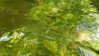 태백의 남동쪽 방터계곡 거울처럼 맑은물 아래로 간다  탐방기ㆍ