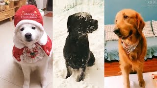 Cute Dogs and Cats | Funny Cats and Dogs Videos Compilation #11 | Cute Is Not Enough