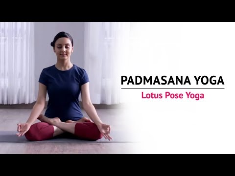 Padmasana Yoga | Lotus Pose Yoga | Steps | Benefits | Yogic Fitness