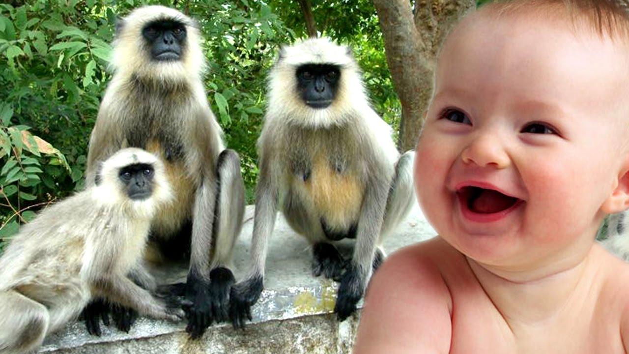 Uncategorized Cute Animal Videos For Kids funny monkeys and children cute videos animal for kids i gujarati clips