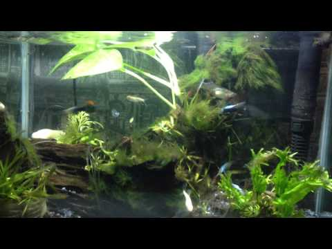 Clean Aquarium Decoration (Christmas)