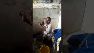 Best funny video every Try not to laugh.