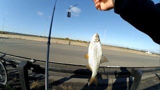 ЛОВЛЯ ПЛОТВЫ ОСЕНЬЮ С МОСТА  Рыбалка в Каменском (Днепродзержинск)