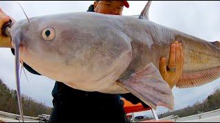 BIG CATFISH on Big Catfish Bait