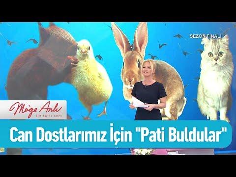 """Can dostlarımız için """"Pati Buldular"""" - Müge Anlı ile Tatlı Sert 21 Haziran 2019"""