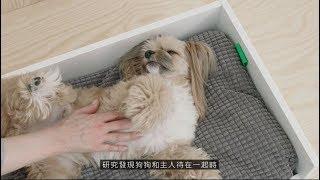 IKEA LURVIG寵物用品系列影片_狗狗篇