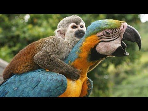 WOW Look This Funny Birds   Funny Parrots  DAILY FUN