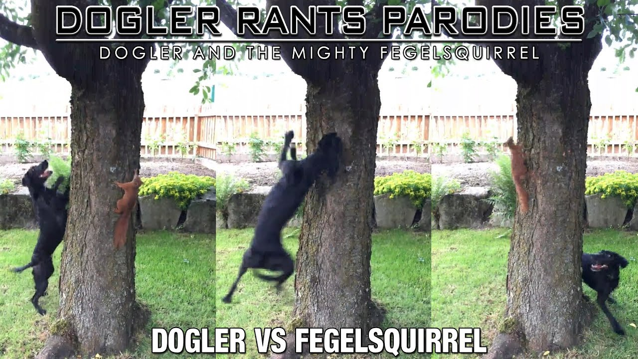 Dogler Vs FegelSquirrel
