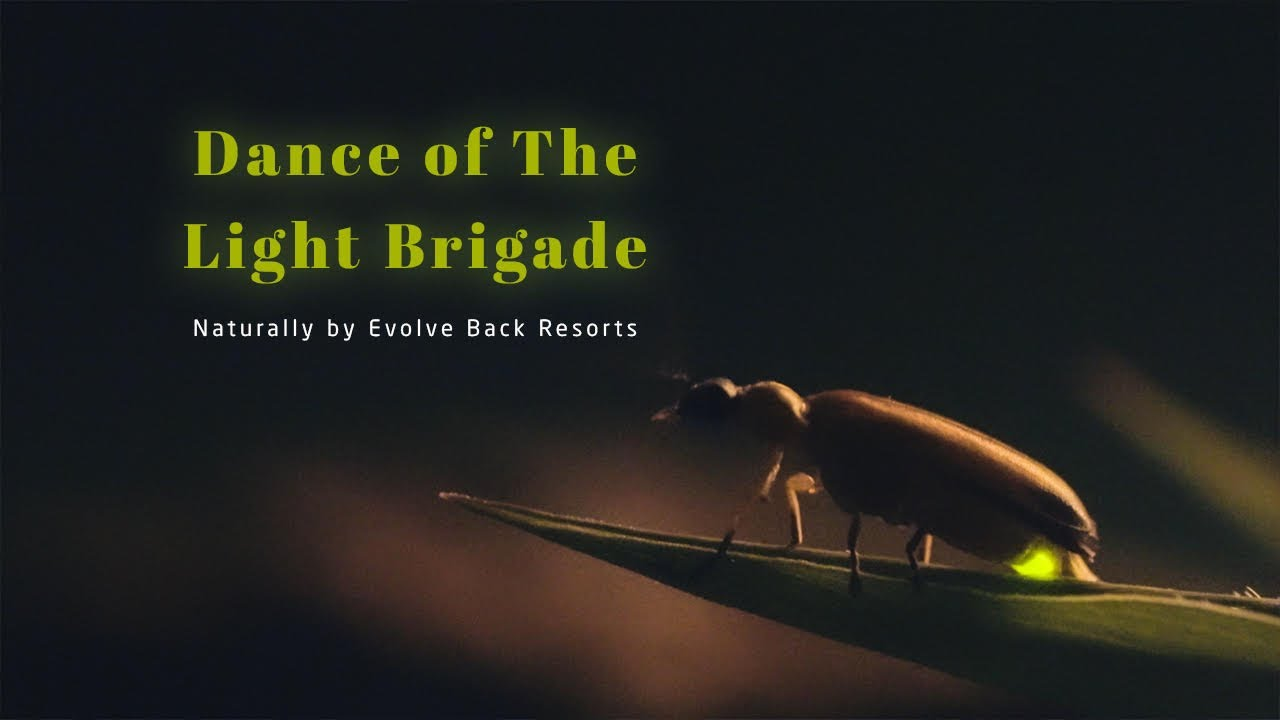 Dance of the Light Brigade - Naturally by Evolve Back Resorts