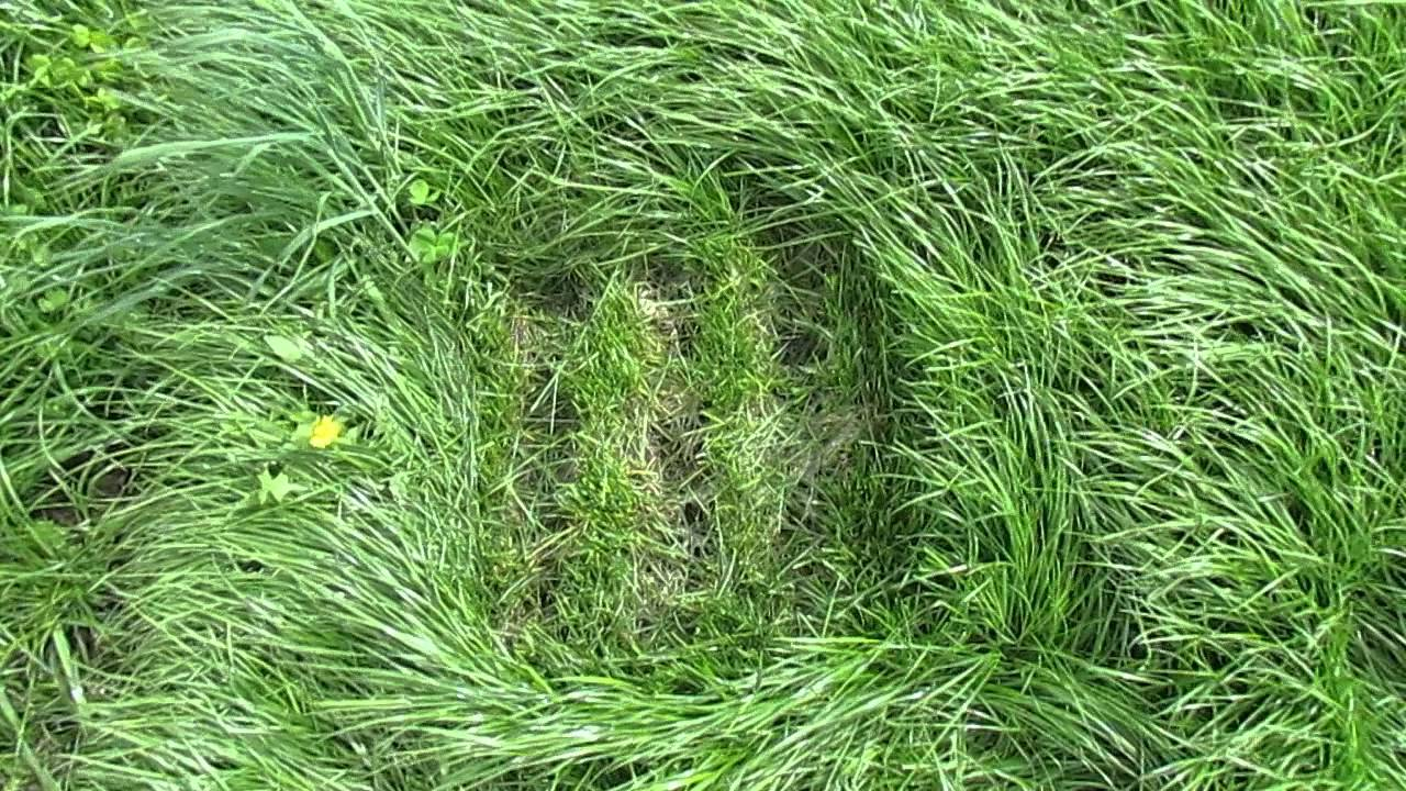 plot  of  bg perennial ryegrass, Beautiful flower