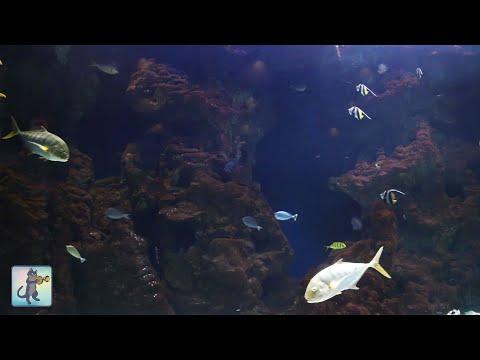 2 HOURS of Beautiful Coral Reef Fish Relaxing Ocean Fish Aquarium Fish Tank & Relax  1080p