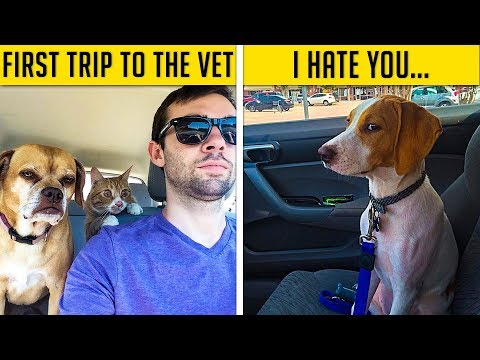 Hilarious Moments When Dogs Realized They Were Going To The Vet Instead Of The Park