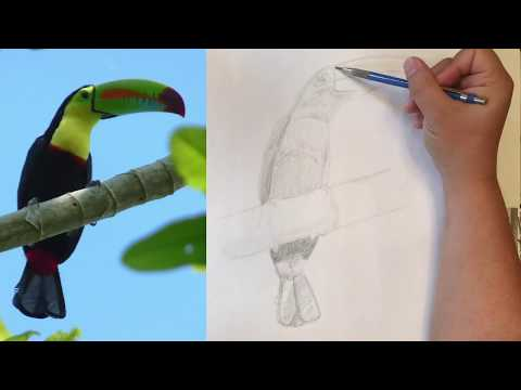 Drawing a Toucan
