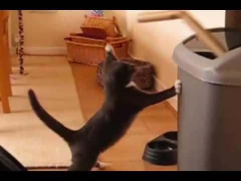 חתולים מצחיקים חמודים | החתול המתאגרף מומלץ!
