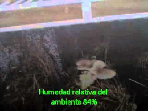 Humedad relativa del ambiente hongo youtube - Quitar humedad del ambiente ...