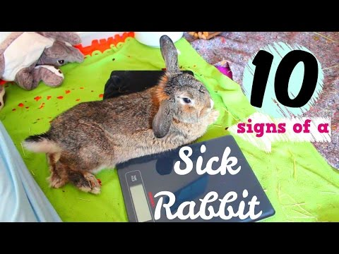 10-signs-that-your-rabbit-is-sick
