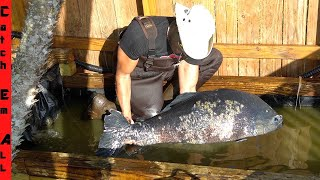 FISH HOSPITAL **GIANT PACU Comes BACK to LIFE!**