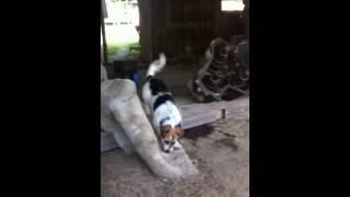 My Mean Junkyard Dog!